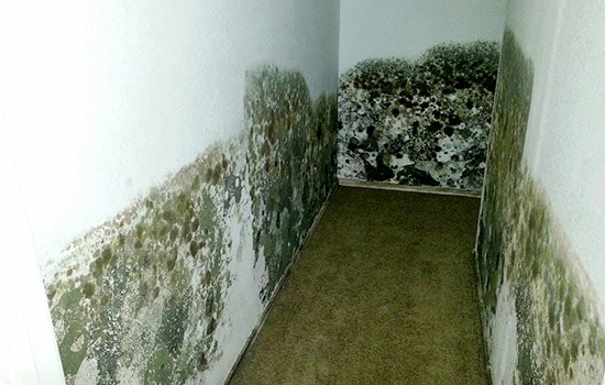 Black Mold Pictures