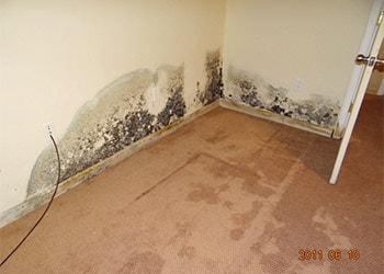 Black Mold in Apartment