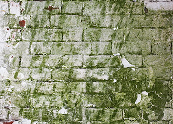 The Danger of Green Mold on Walls and How to Remove It