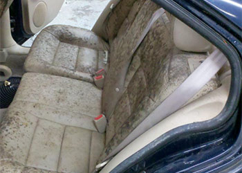 A Natural Way to Remove Green Mold in Car Using White Vinegar